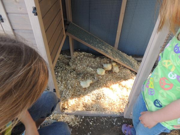 the happy crazy house chicken coop